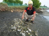 Quảng Nam: Hàng loạt ao cá nuôi bất ngờ chết trắng