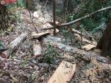Phó Chủ tịch tỉnh Kon Tum chỉ đạo sau loạt phóng sự điều tra khai thác rừng già Đăk Rơ Nga của Thương hiệu và Pháp luật