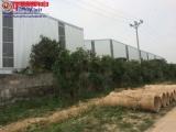 Đông Anh, Hà Nội: Hồ sơ chưa được duyệt vẫn cố tình xây dựng nhà xưởng trái phép