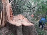 Đắk Lắk: 'Đột kích' hiện trường khai thác gỗ lậu quy mô lớn