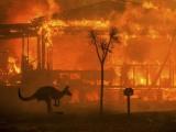 Australia: Cháy rừng khiến gần nửa tỉ động vật hoang dã bị thiêu cháy