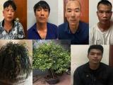 Hà Nội: Khởi tố nhóm đối tượng chuyên trộm cắp cây cảnh