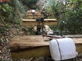Tỉnh Kon Tum chỉ đạo điều tra, xử lý nghiêm vụ phá rừng sau khi báo chí phản ánh