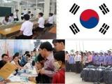 Tạm dừng tuyển chọn lao động đi làm việc tại Hàn Quốc