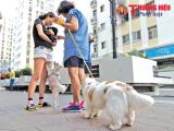 Nuôi chó và mèo trong chung cư: Không nên vì nhu cầu cá nhân mà ảnh hưởng tập thể