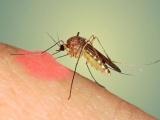 Số ca mắc sốt xuất huyết ở Hà Nội có xu hướng gia tăng nhanh