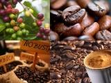 Giá cà phê ổn định trở lại, giá tiêu giảm nhẹ