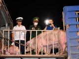 Nhập 9.000 con heo từ Thái Lan, giá heo trong nước vẫn tăng cao