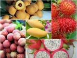 Khơi thông dòng chảy xuất khẩu hoa quả sang thị trường Mỹ