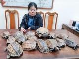 Một người bị công an bắt giữ khi đang vận chuyển 15 cá thể rùa