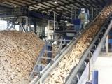 Xuất khẩu tinh bột sắn sang Trung Quốc tăng mạnh