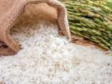 9 giống gạo thơm được miễn thuế nhập khẩu khi xuất sang EU