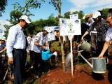 Vinamilk chung tay cùng người dân vừa trồng cây gây rừng, vừa tạo sinh kế