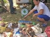 Lâm Đồng: Phạt hơn 300 triệu đồng với đối tượng tàng trữ, mua bán động vật rừng