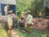 Quảng Ninh: Thu giữ và tiêu hủy 13.500 con gà giống nhập lậu