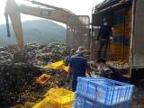 Quảng Ninh: Tiêu hủy 44.000 con gà giống nhập lậu