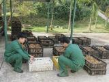Quảng Ninh: Thu giữ gần 30.000 con gà giống và trứng vịt nhập lậu