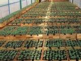 Chính phủ xuất cấp hạt giống cây trồng hỗ trợ Hà Giang và Ninh Thuận