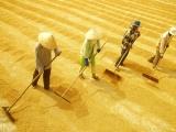 Kim ngạch xuất khẩu gạo tăng 8% giá trị so với năm 2019