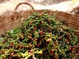 Diễn biến giá tiêu và cà phê trong phiên giao dịch ngày 14/11