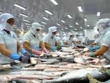 Hơn 130 doanh nghiệp Việt xuất khẩu cá tra sang Trung Quốc