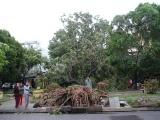 Bão số 13 sáng 15/11: Miền Trung mưa lớn, gió giật cấp 12