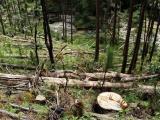 Phó Thủ tướng yêu cầu xử lý nghiêm vụ phá rừng ở Lâm Đồng