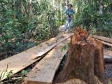 Lâm Đồng: Khẩn trương điều tra, xử lý nghiêm vụ phá rừng