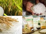 Dự báo giá gạo Châu Á sẽ tiếp tục tăng