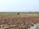 Thủ tướng đồng ý chuyển mục đích sử dụng một số diện tích đất trồng lúa tại 2 tỉnh
