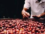 Diễn biến giá cà phê và hồ tiêu ngày 11/1