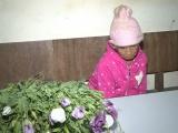 Sơn La: Phát hiện một đối tượng trồng thuốc phiện trên nương