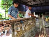 Làng Cuông - nơi gìn giữ nét văn hóa truyền thống mành tre