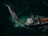 Phát minh thiết bị cảnh báo cá voi tiến gần đến tàu