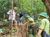 Rừng đầu nguồn sông Bến Hải bị phá: Kết luận xử lý chưa xong, tiếp tục được phê duyệt tỉa thưa và bán gỗ