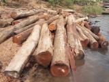 """Gia Lai: Đột kích đại """"công trường"""" gỗ lậu giữa lòng hồ Sê San"""