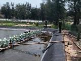 Quảng Trị: Hơn 100 vạn tôm giống chết trắng, nghi bị đầu độc