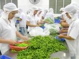 Bất chấp dịch bệnh, xuất khẩu rau quả vẫn nhận được nhiều tín hiệu tích cực