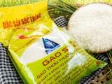 Bộ NN&PTNT sẽ xin phép Chính phủ mua lại bản quyền giống lúa ST25