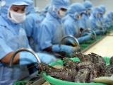 Bất chấp dịch bệnh Covid-19, xuất khẩu tôm vẫn khởi sắc