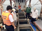 Bắt giữ tàu vận chuyển 50.000 lít dầu DO trái phép tại Kiên Giang