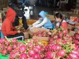 Trung Quốc tạm dừng nhập khẩu thanh long Việt Nam