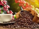 Thị trường xuất khẩu cà phê của Việt Nam dự báo sẽ khả quan hơn trong những tháng cuối năm