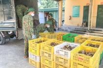 Quảng Ninh: Bắt 2 vụ vận chuyển hơn 29.000 gà giống và trứng vịt nhập lậu