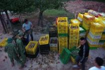 Quảng Ninh: Thu giữ gần 105.000 gia cầm giống, trứng gia cầm nhập lậu