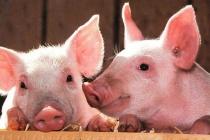 Giá lợn hơi hôm nay 28/2 cao nhất đạt 78.000 đồng/kg