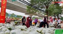 Chung tay giải cứu nông sản cho nông dân Hải Dương