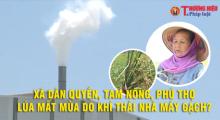 Xã Dân Quyền - Tam Nông - Phú Thọ: Lúa mất mùa do khí thải nhà máy gạch?