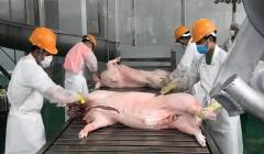 Giá lợn hơi hôm nay (14/8) biến động nhẹ ở 2 miền