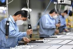 Doanh nghiệp nhỏ và vừa Việt Nam: Lạc quan đón cơ hội mới sau đại dịch COVID - 19